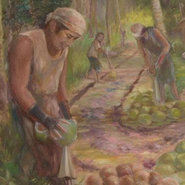 Jhun-Ciolo-Diamante-Coconut-harvest